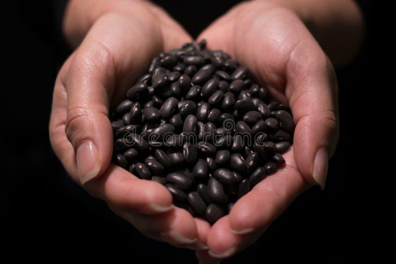 Las alubias negras crudas crudas se sostuvieron ahuecado en manos femeninas con el fondo negro y el foco bajo fotografía de archivo libre de regalías