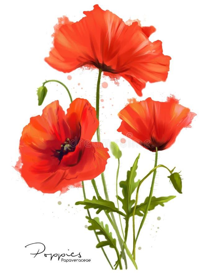 Las amapolas rojas florecen y salpican stock de ilustración