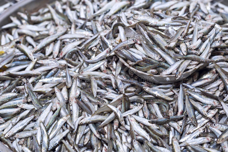 Las anchoas frescas pescan en la exposición del hielo en el mercado de los mariscos adentro foto de archivo libre de regalías