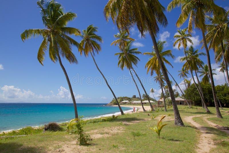 Las Antillas, el Caribe, Antigua, St Mary, Morris Bay, palmeras y playa fotos de archivo