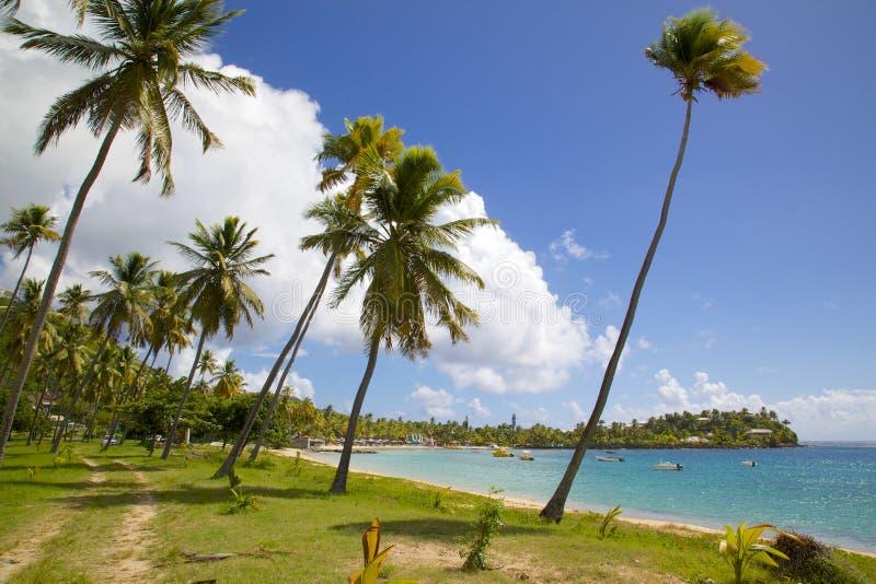Las Antillas, el Caribe, Antigua, St Mary, Morris Bay, palmeras y playa fotografía de archivo