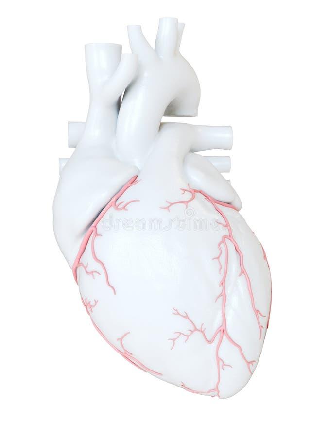 Las arterias coronarias stock de ilustración