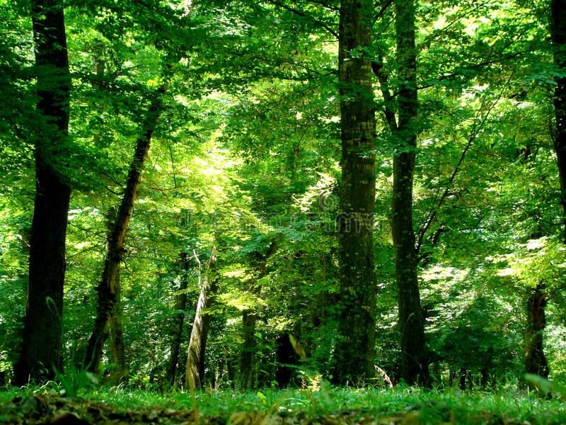 Las, Azerbejdżan obraz royalty free