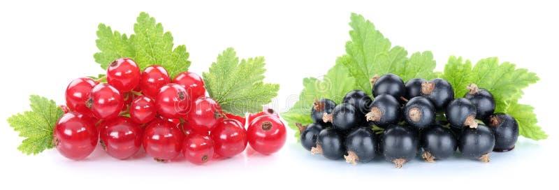 Las bayas de las pasas de la grosella roja y negra dan fruto aislado imagenes de archivo