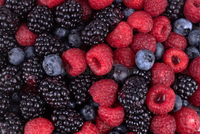 las bayas maduras de frambuesas frescas, rojas, arándanos y moras violetas se destacan en primer plano, a la luz del día fotos de archivo