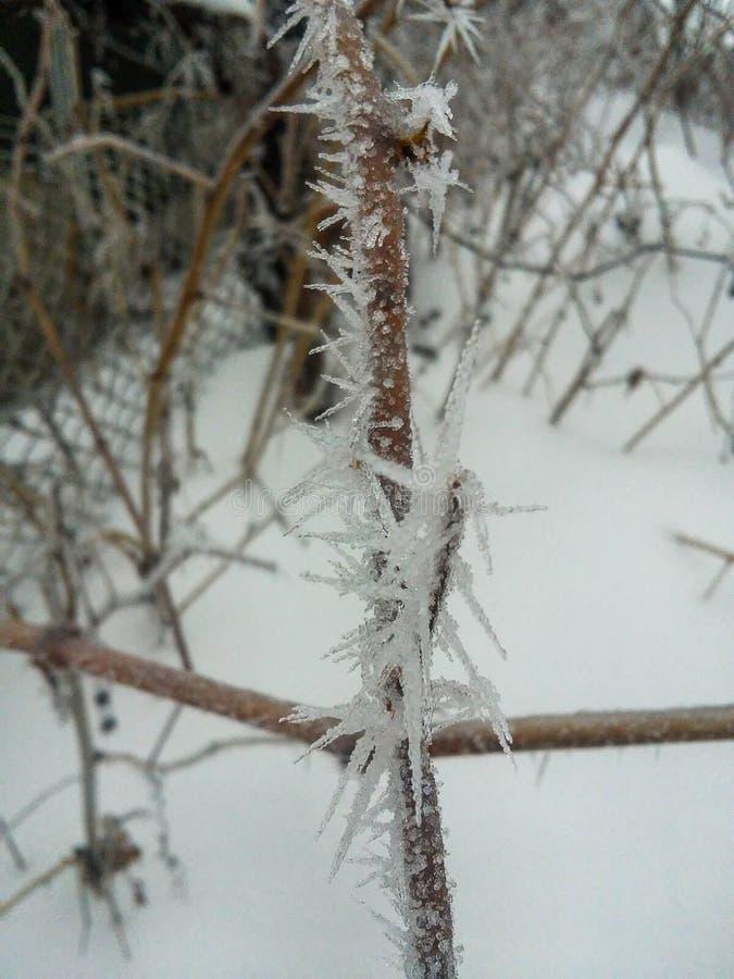 Las bayas rojas congeladas encendido rowen el árbol cubierto con helada foto de archivo libre de regalías