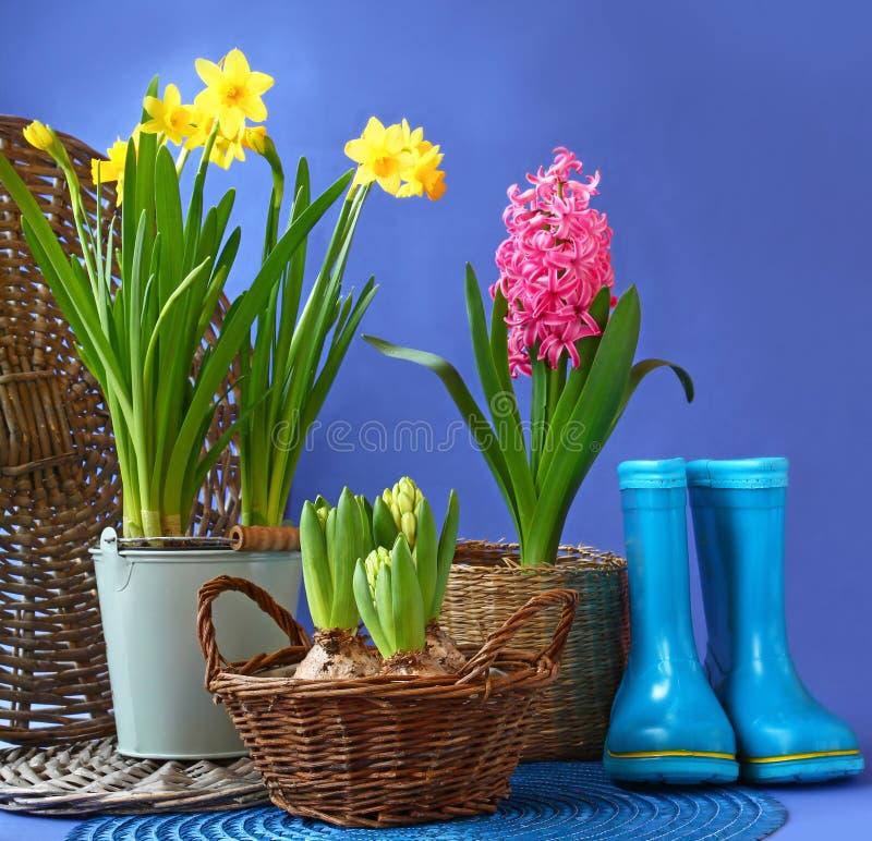 Las botas y las flores azules de goma de la primavera están en una cesta fotos de archivo