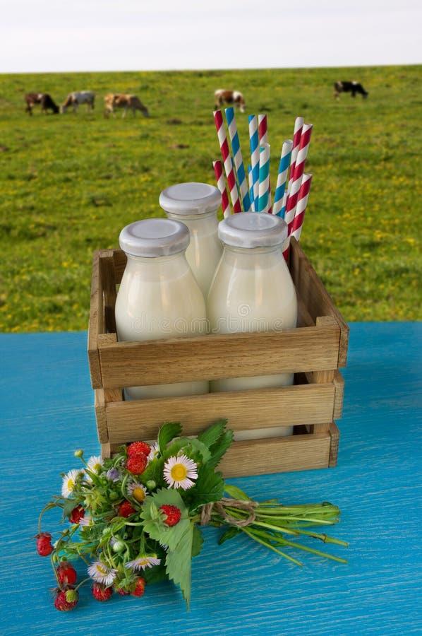Las botellas de leche arreglaron en filas en una tabla de madera imagen de archivo libre de regalías