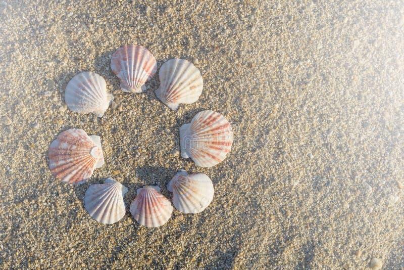 Las cáscaras arreglaron circular en la arena en la playa foto de archivo
