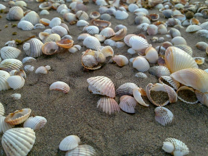 Las cáscaras del mar forman un rastro en la arena en la playa caspia, Irán, Gilan fotografía de archivo