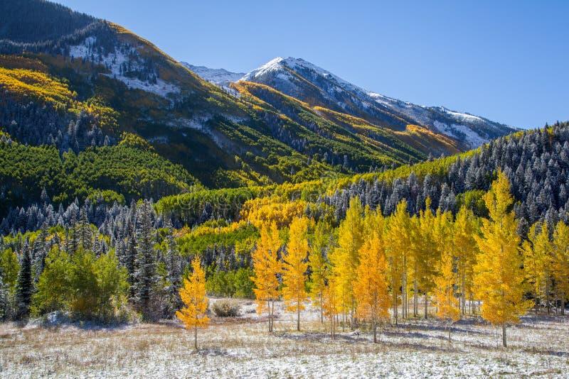 Las caídas colorean en la montaña de Colorado foto de archivo
