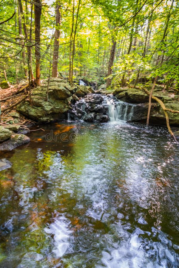 Las caídas de Apshawa en una reserva natural suburbana en NJ son rodeadas por el bosque verde enorme en una tarde del verano foto de archivo