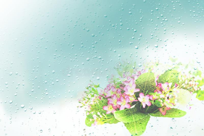 Las caídas de la lluvia en la tierra hacen las flores rosadas hermosas imagenes de archivo