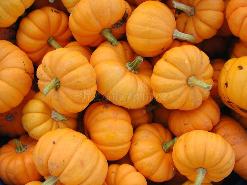 Las calabazas pequeñas, anaranjadas agruparon en venta imagen de archivo