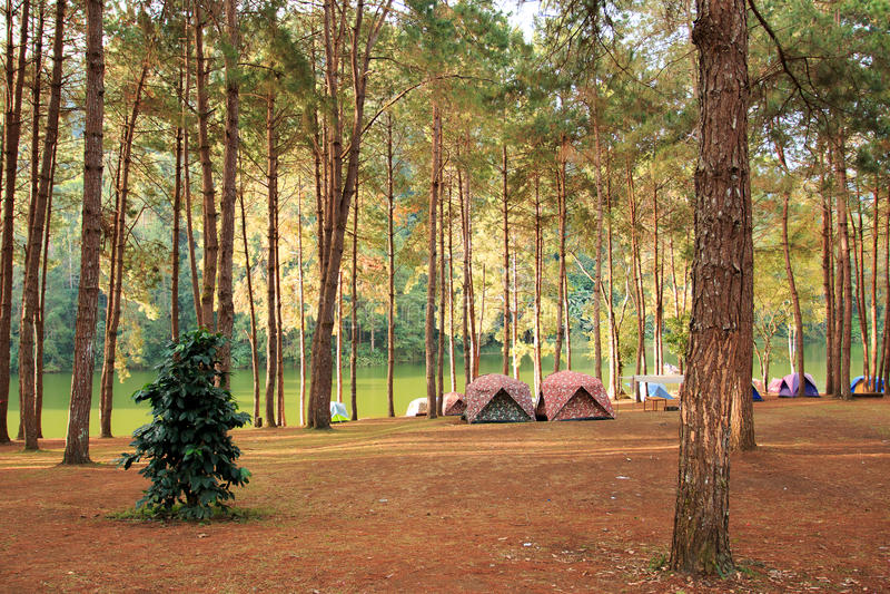 las campingowy obrazy royalty free