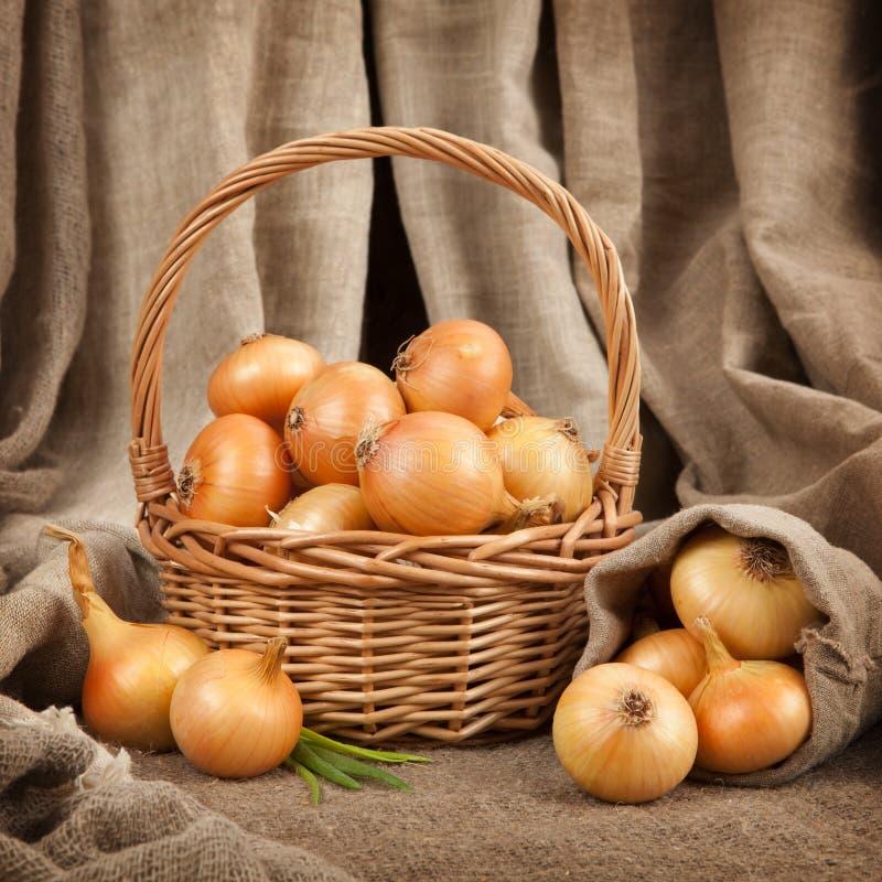 Las cebollas hermosas y maduras en una cesta imagen de archivo