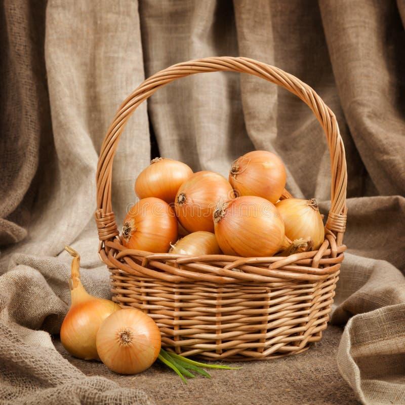 Las cebollas hermosas y maduras en una cesta en la tabla fotos de archivo libres de regalías