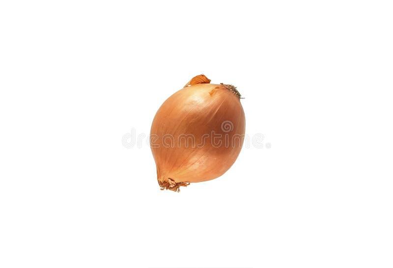 Las cebollas, no pelaron el aislante en el fondo blanco imagen de archivo libre de regalías