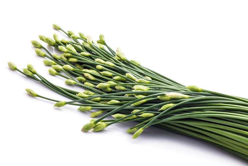 Las cebolletas florecen o cebolleta china aislada en el fondo blanco edi fotografía de archivo libre de regalías
