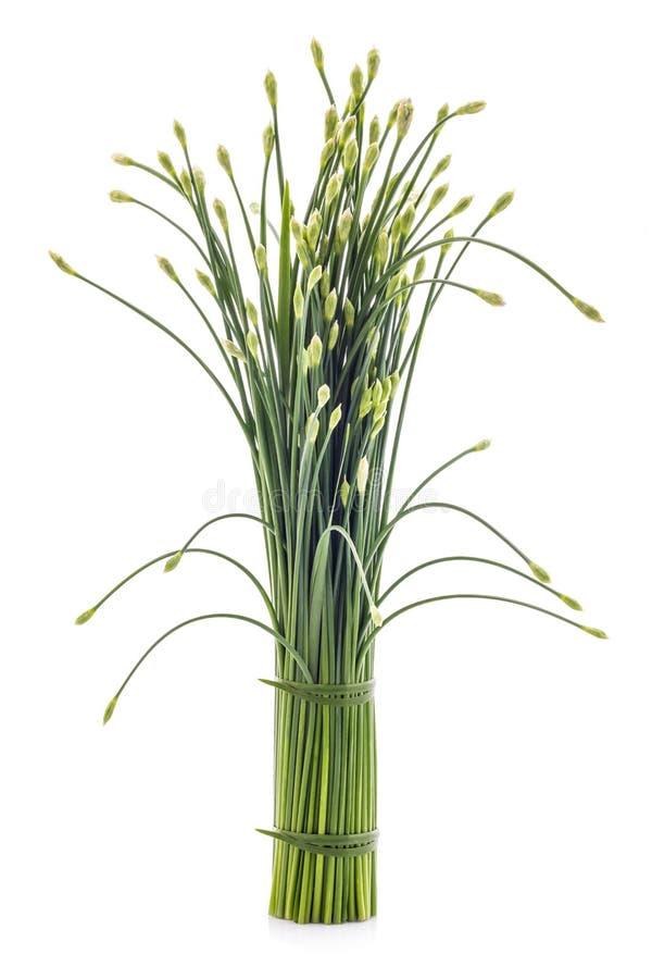 Las cebolletas florecen o cebolleta china aislada en el fondo blanco edi imagenes de archivo