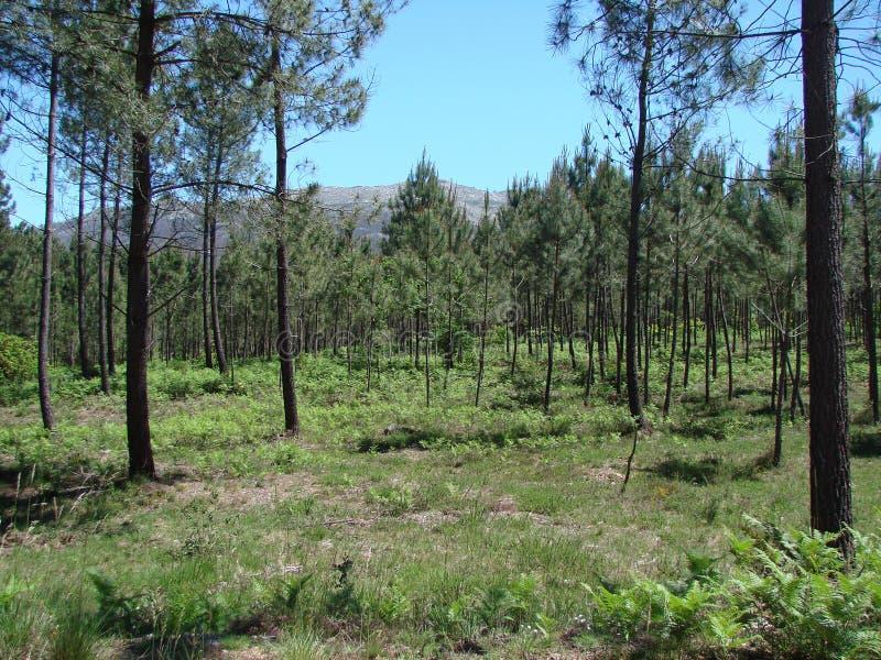 Las cercanías de la ciudad de Redondale españa Vistas naturales del bosque español y de las diversas flores de la primavera foto de archivo libre de regalías