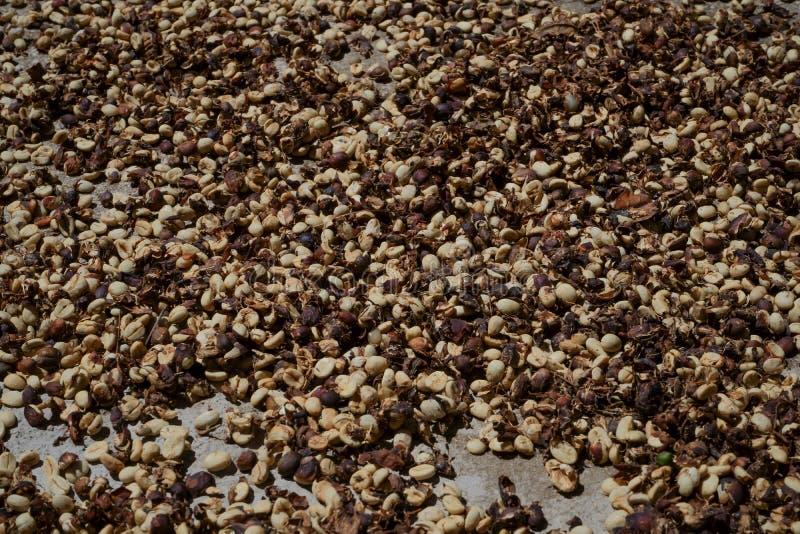 Las Cerezas Están En La Terraza Del Cemento Para Secarse