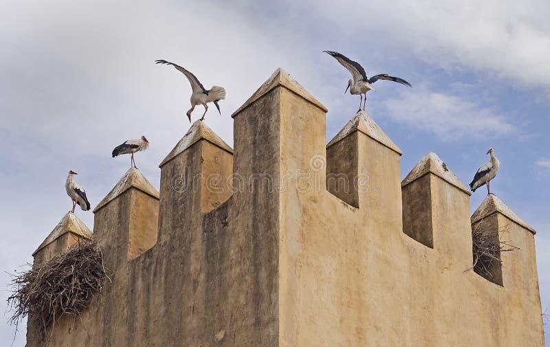Las cigüeñas encienden en torre del alminar en Fes, Marruecos fotografía de archivo