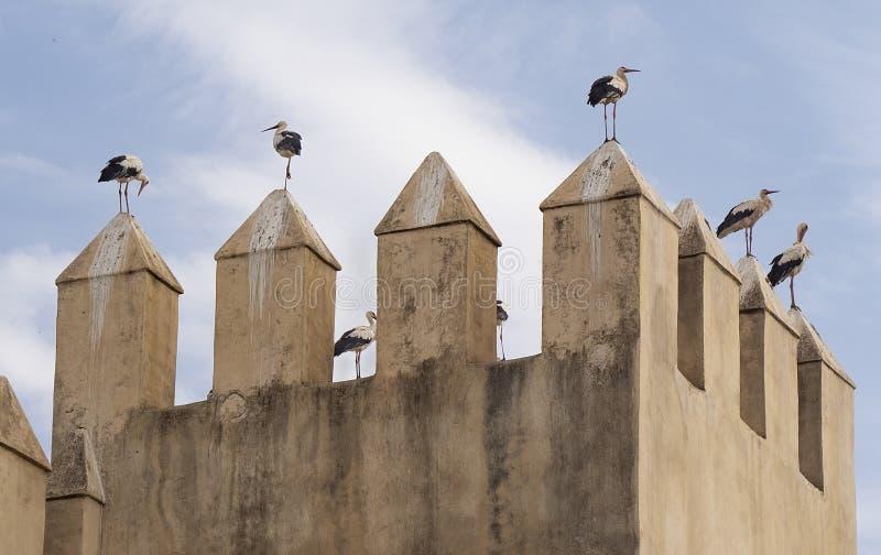 Las cigüeñas encienden en torre del alminar en Fes, Marruecos foto de archivo libre de regalías