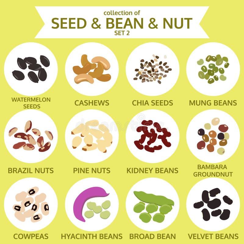 Las colecciones de semilla y haba y nuez fijaron dos, comida, vector ilustración del vector