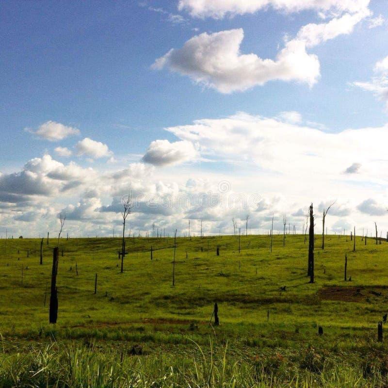 Las colinas con los árboles carbonizados imagen de archivo