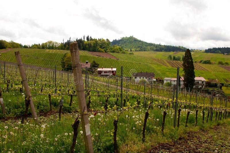 Las colinas con los viñedos en Alemania fotos de archivo libres de regalías