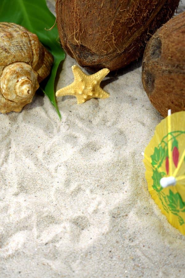 Las conchas marinas, los cocos y los paraguas del cóctel están enmarcando el espacio de la copia en una arena de la playa imagen de archivo libre de regalías