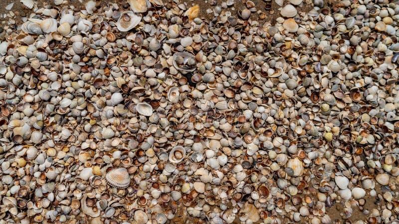 Las conchas marinas mienten en la costa de mar, textura imágenes de archivo libres de regalías