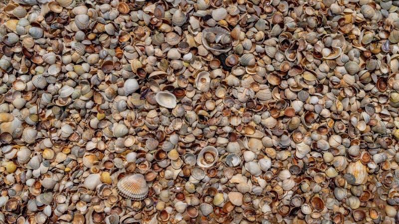 Las conchas marinas mienten en la costa de mar, textura foto de archivo