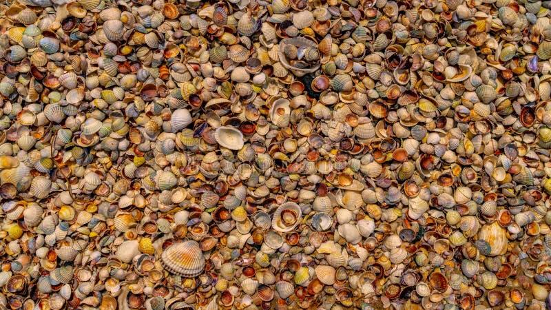 Las conchas marinas mienten en la costa de mar, textura imagen de archivo