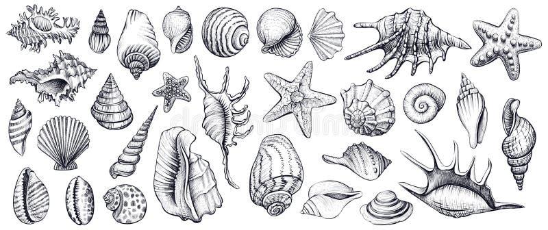 Las conchas marinas vector el sistema Ilustraciones drenadas mano fotografía de archivo