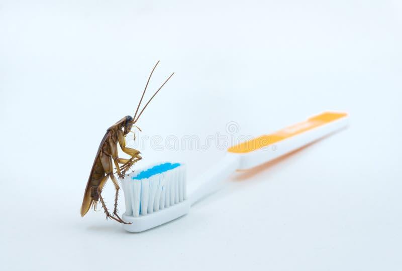 Las cucarachas asiáticas están en el cepillo de dientes imágenes de archivo libres de regalías
