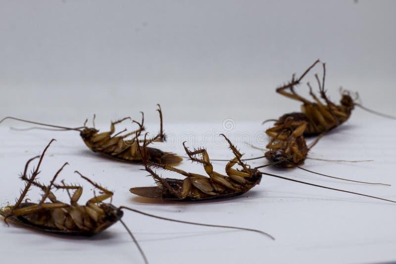 Las cucarachas son portadores de la enfermedad fotos de archivo libres de regalías