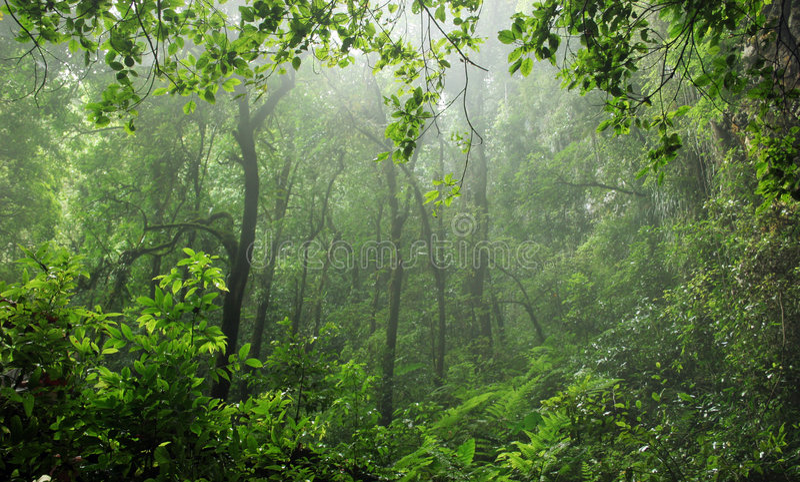las deszcz obraz royalty free