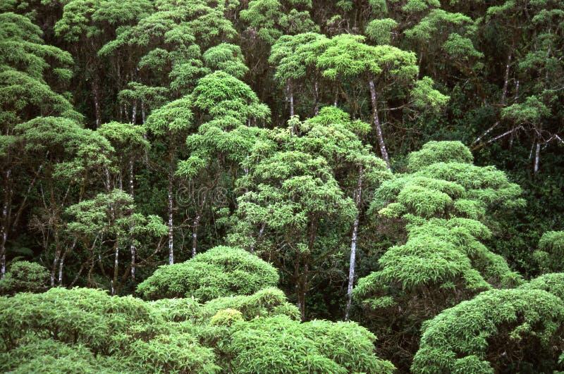 las deszczowy zdjęcia stock