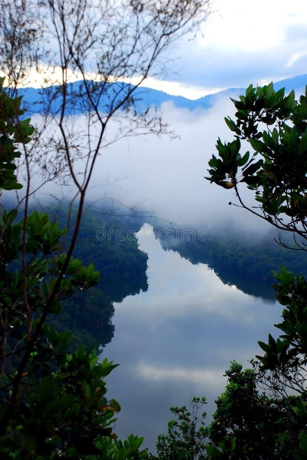 las deszczowy obrazy royalty free