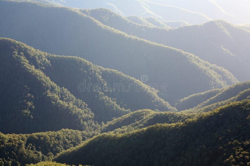 las deszczowy rano zdjęcia stock