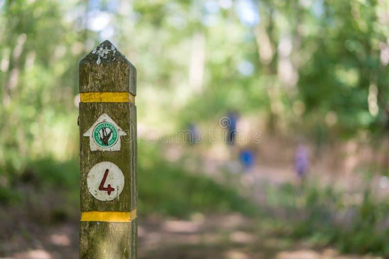 Las direcciones de madera señal adentro el bosque de Bansted imagen de archivo