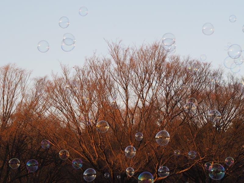 Las docenas de burbujas cogieron en la luz del sol del parque apenas alrededor para estallar imagen de archivo