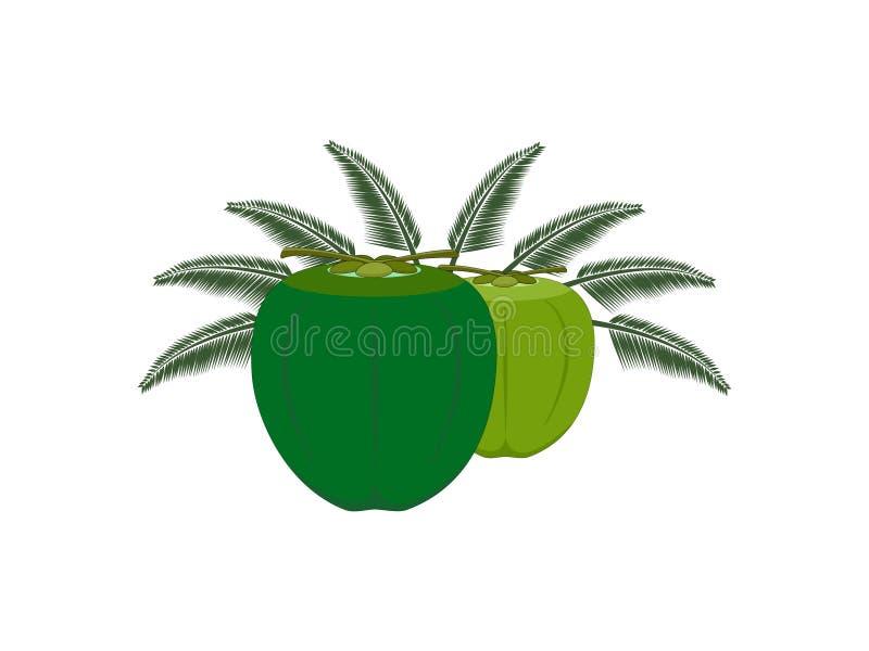 Las dos frutas y hojas del coco de la carne libre illustration