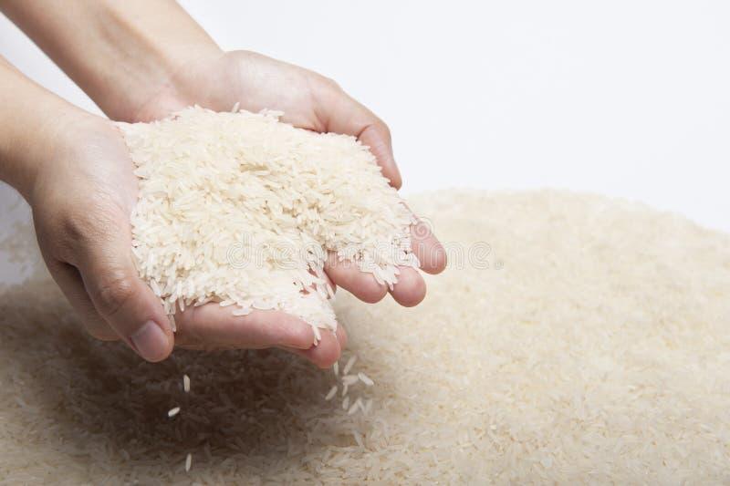 Las dos manos de la mujer que sostienen el arroz del jazmín, arroz que cae de las manos fotos de archivo