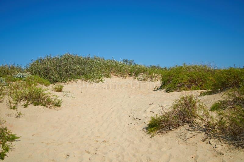 Las dunas de arena acercan a Anapa, sur de Rusia fotos de archivo
