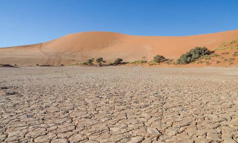Las dunas de arena rojas elevadas hermosas y secan la superficie agrietada de la arcilla en Sossusvlei famoso en el desierto de N fotografía de archivo libre de regalías