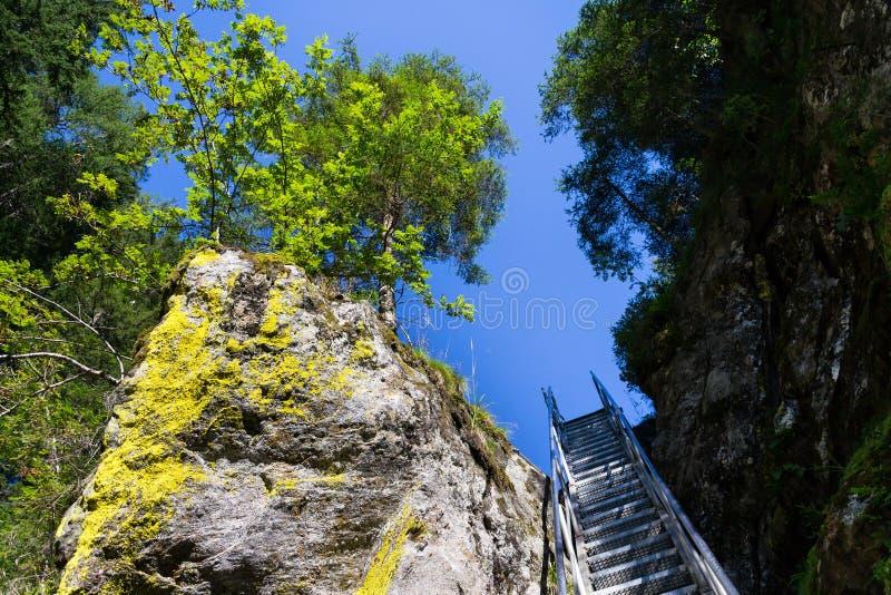 Las escaleras de la escalera en rastro alpino con infierno gorge, Schladming, Austria imagen de archivo