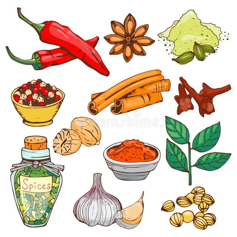 Las especias que sazonan elementos de las hierbas de la comida del estilo y los brotes de flor dibujados mano de la cocina del in stock de ilustración